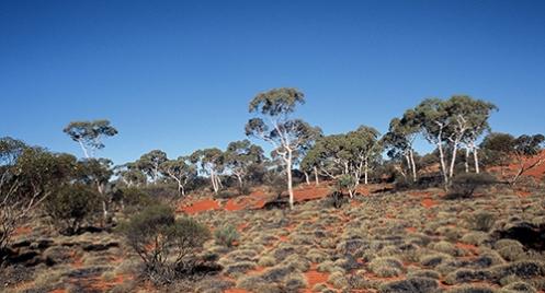 Great Victoria Desert Malone 2005