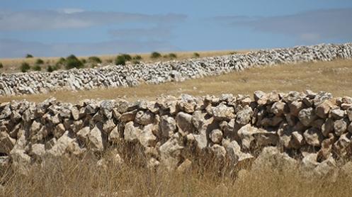 Limestone Fencing, Eyre Peninsula Malone