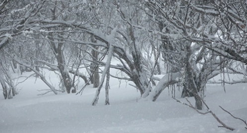 Snow Country, Great Dividing Range, Malone