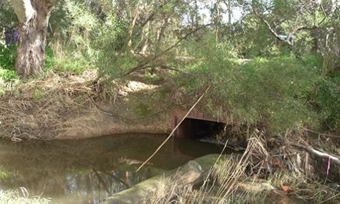 Warriparinga Wetlands Weir Malone 1998