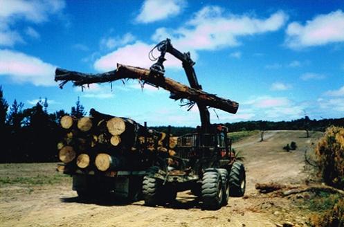 Tjirbruki Narna arra' - Collecting trunks, 1996 (Malone)